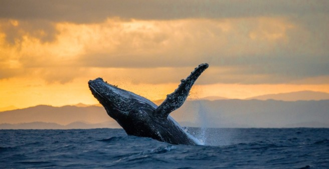 humpback-whale-watching-hawaii.jpg